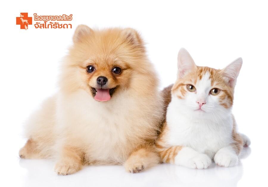 ตรวจสุขภาพสุนัขและแมว