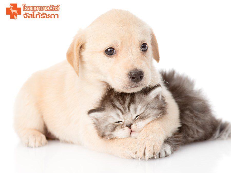 แพ็กเกจวัคซีนสำหรับลูกสุนัขและลูกแมว