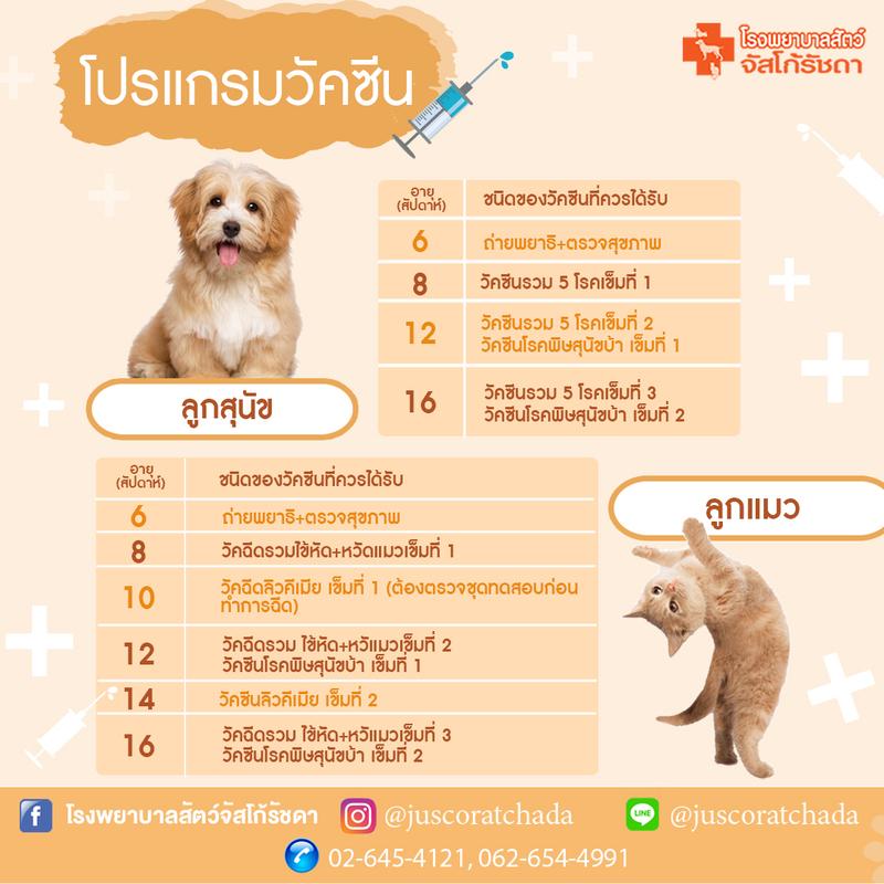 โปรแกรมวัคซีนสำหรับลูกสุนัขและลูกแมว